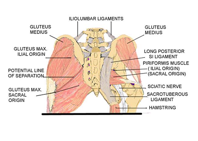 자연치유 연구소   Basic Anatomy - Daum 카페